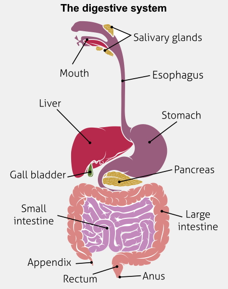 Which term describes inflammation of the small intestine